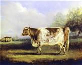 2947 A Short Horned Cow
